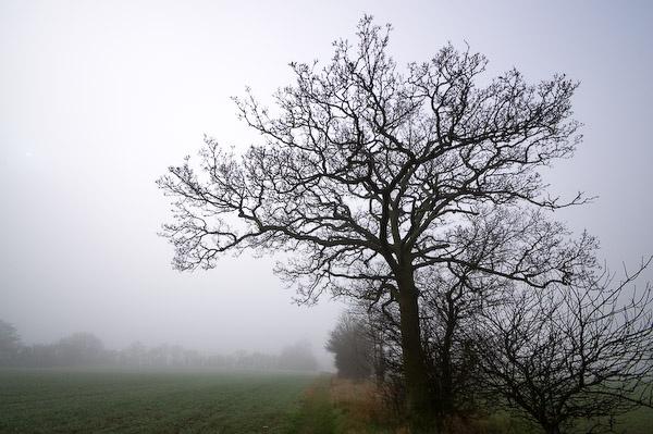 Morning mist by HouseMartin