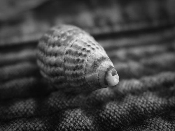 ShellFish? by tull