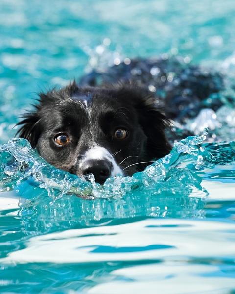 Swim by SteveD23