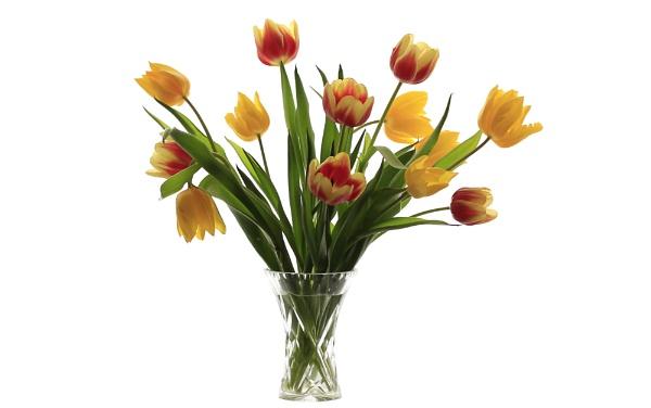 Tulips by MariaElaine