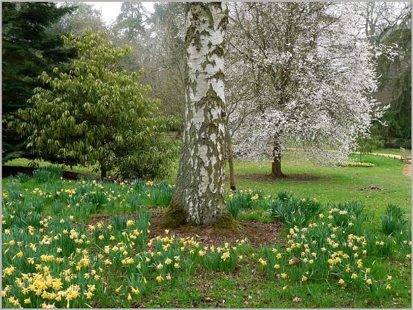 Spring in Batsford Arboritum by f8