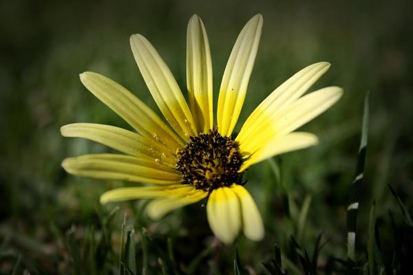 Wild Flower by jnrmclean