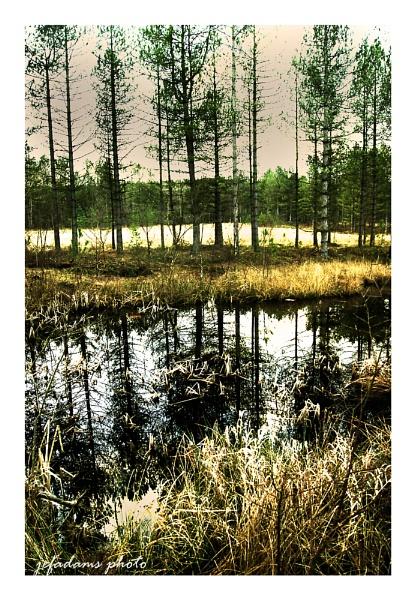 woodland pond by Doug1