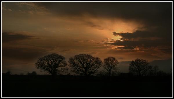 Trees&sky by Heffo1