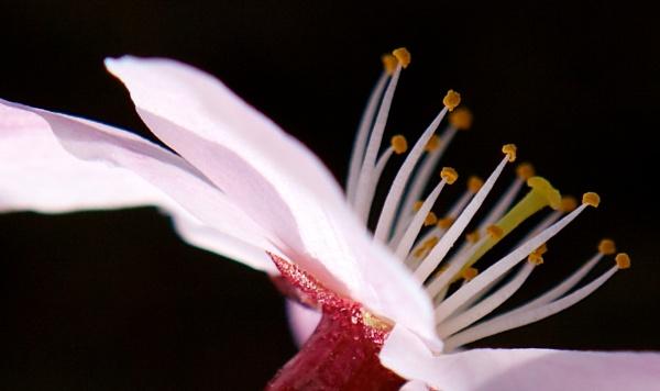 Nectar by helena