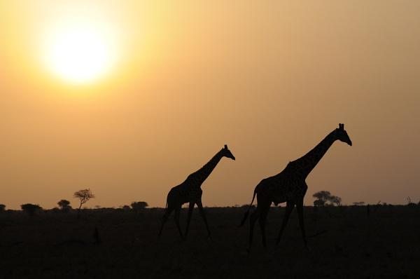 Under African Skies by TRAVELLINGFOOTPRINT