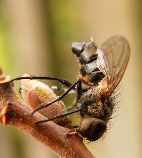 nectar hunt.