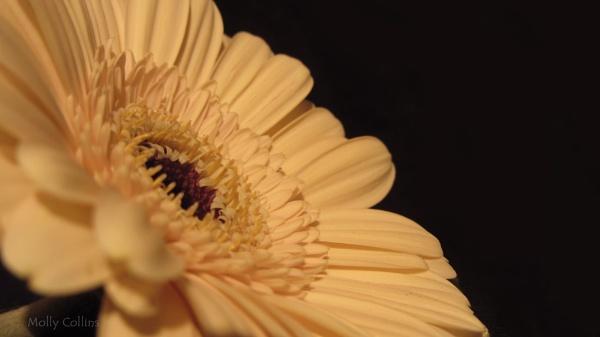 Yellow Flower by MollyOcean