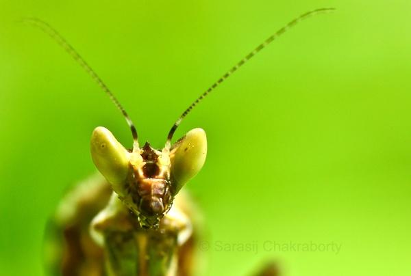eye of mantis by sarasij