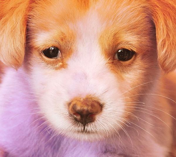 Puppy by DangJongBoon