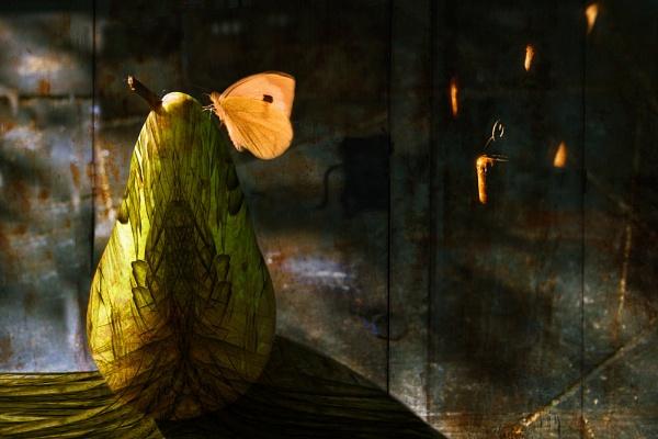 Butterfly & Pear