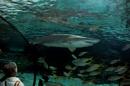 Aquarium series by banehawi at 19/03/2012 - 3:27 AM