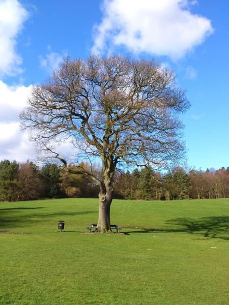 Balbernie Park, Markinch by kaylesh