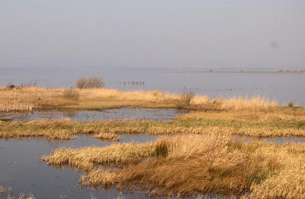 Vane Nature Reserve by kaylesh
