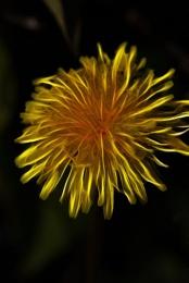 Fractaluis Flower