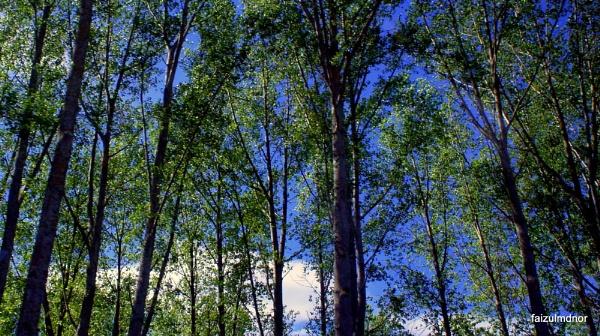 McKenzie\'s Trees by faizul_md