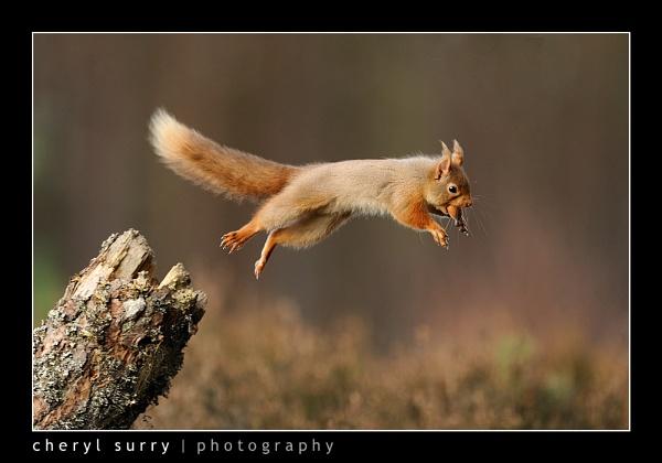 Leap of Faith by csurry