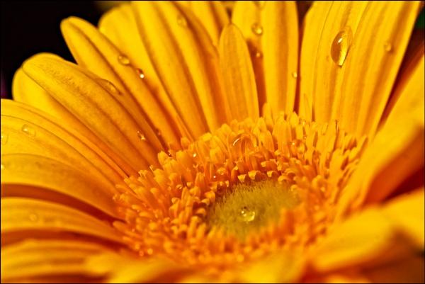 Yellow Flower by dwilkin