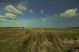 Windswept Long Grass