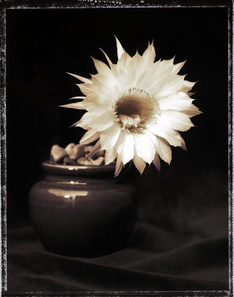 Flower by PaddyBoyle
