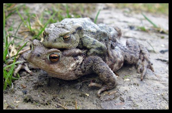 Froggy Back by GYPSYOFTHESKY