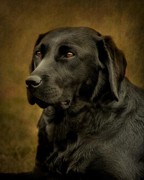 Dog by DannoM