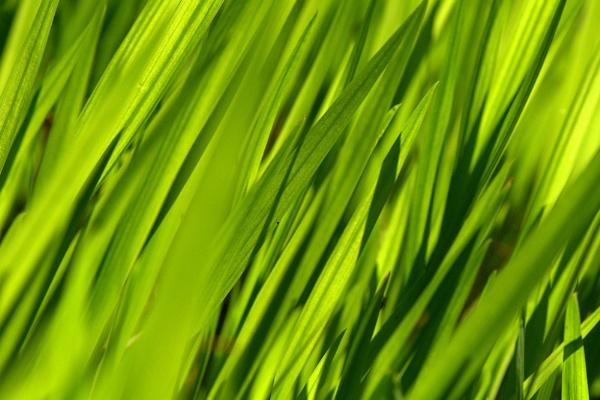 Green by EventHorizon