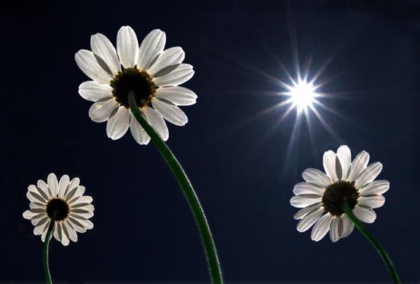 Flower Power by appysnappy
