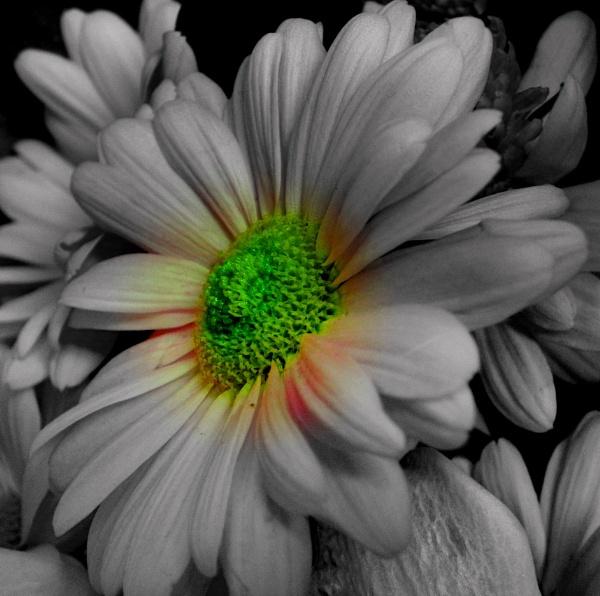 Flower by hughsey
