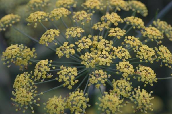 Flowers in a Garden by tom9005