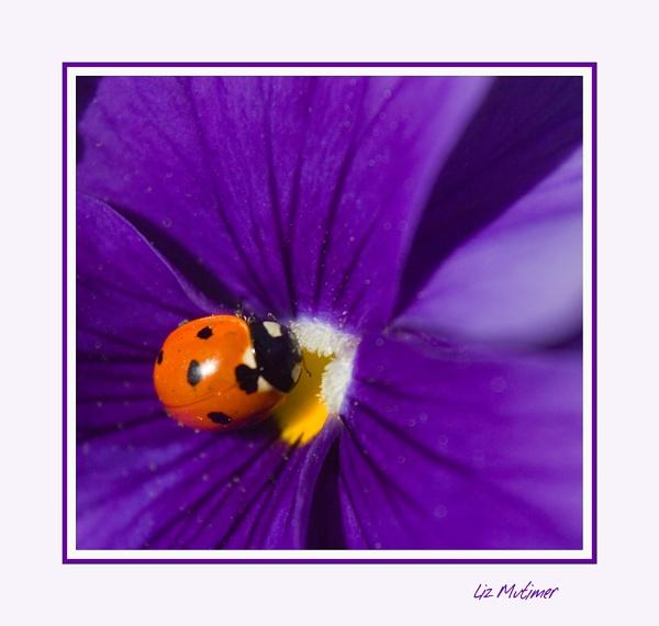 A Spot of Colour by LizMutimer