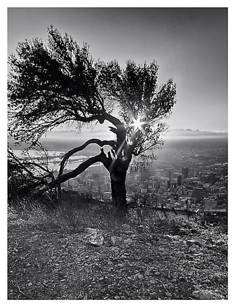 Sunrise in Loving Black & White by devlin