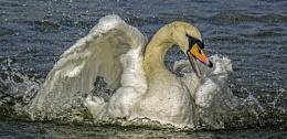 Splish, Splash, I'm taking a bath