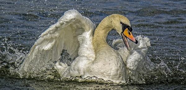 Splish, Splash, I\'m taking a bath by JackieB