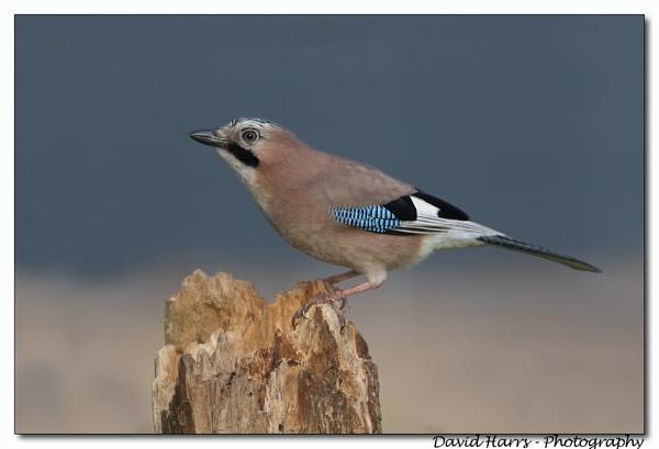 Bird on a Big Stick by johnjo58