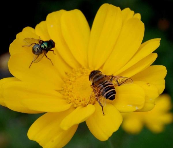 honey bees by manashi