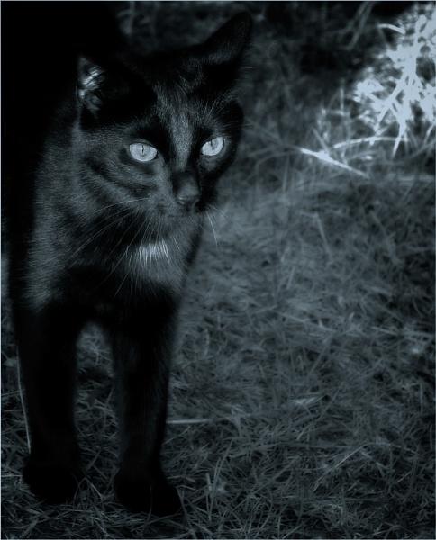 Midnight Rambler II by cameracat