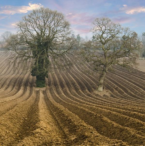 Freshly ploughed