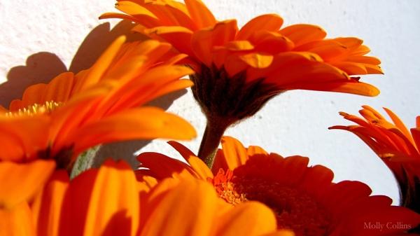 Orange Flowers by MollyOcean
