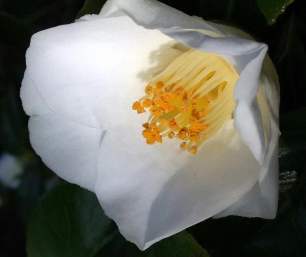 White Beauty by mashwood10