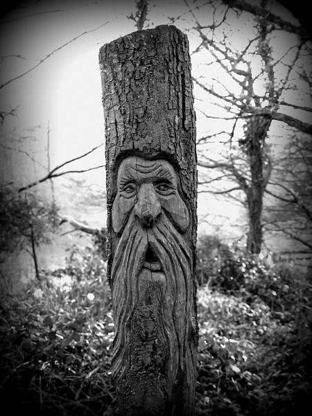 The Log Man by carpmanstu