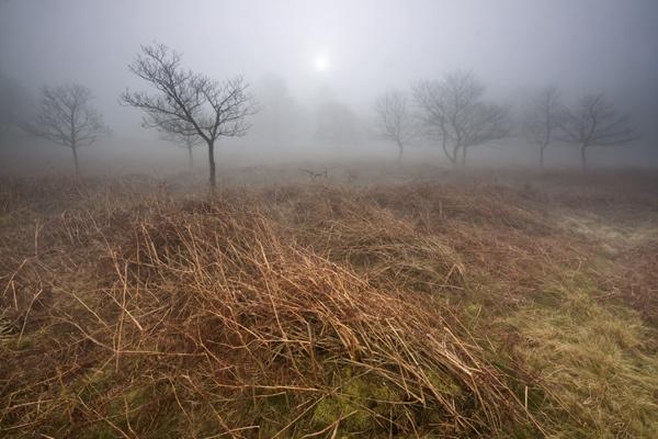Fog on Ramsley moor by sheilac