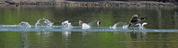 Splashdown by ChunkyButFunky