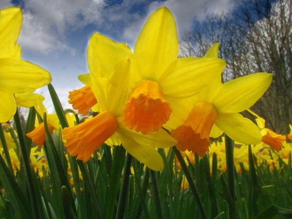 Mellow Yellow by danbrann