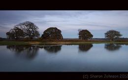 Reflective trees
