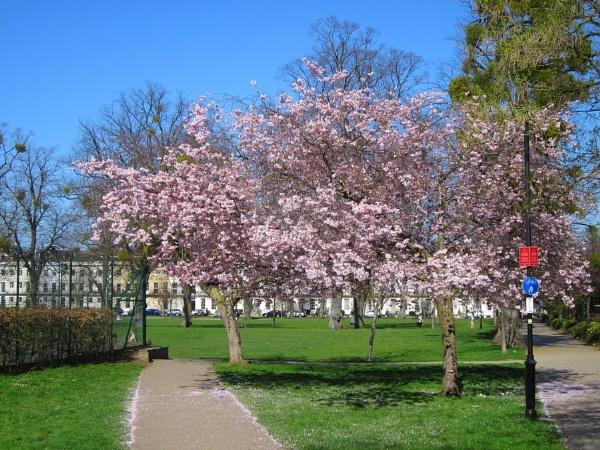 Spring in Cheltenham by Glostopcat