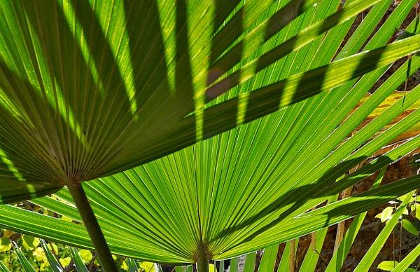 PURNULULU_MINI PALMS GORGE #6 by JN_CHATELAIN_PHOTOGRAPHY
