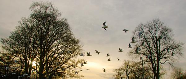 In flight by cymroDan