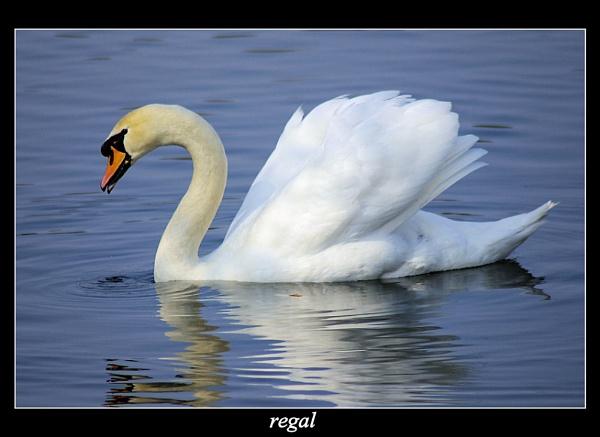 regal by raygregson