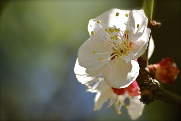Spring blossom by gavinrfuller